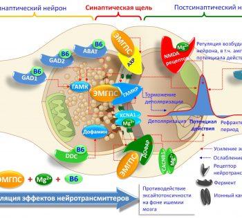 Синергизм между микроэлементами, витаминами, пептидами