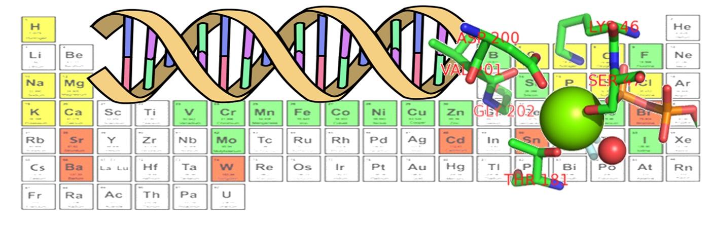 Микроэлементы и генетика
